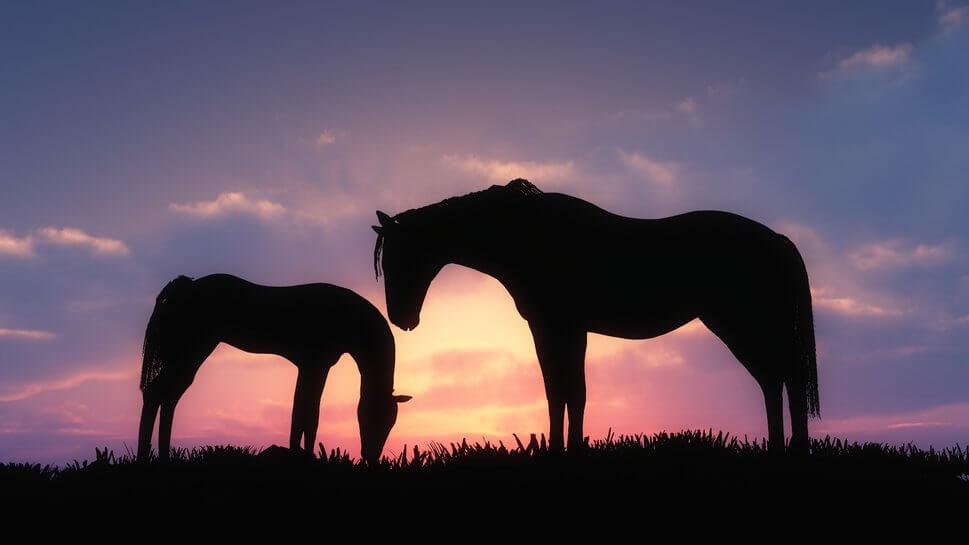 108227__art-horses-sunset-silhouette-foal-grass-clouds_p